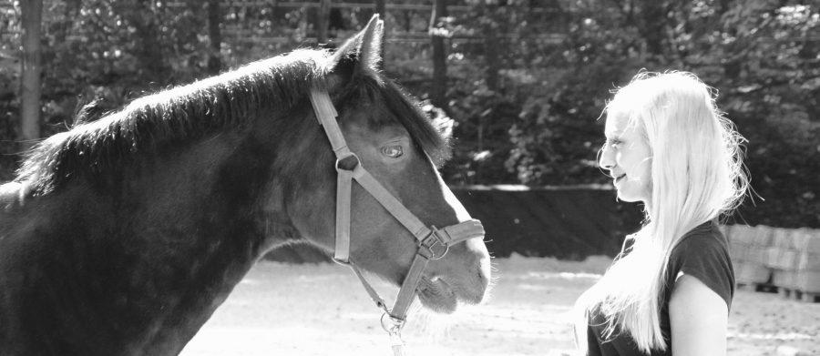 Pferdecoaching